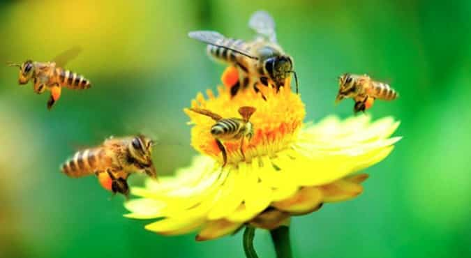 neonicotinoides-abeilles