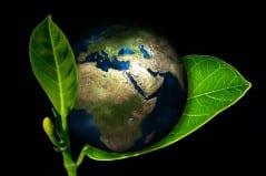 la terre posée sur une feuille