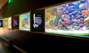 De beaux aquariums a Nancy