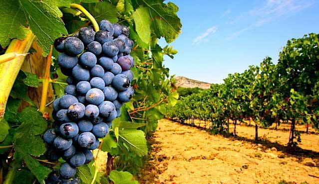 L'œnotourisme et ses visites des vignobles