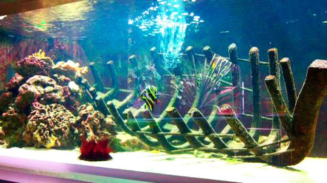 Museum-Aquarium de Nancy