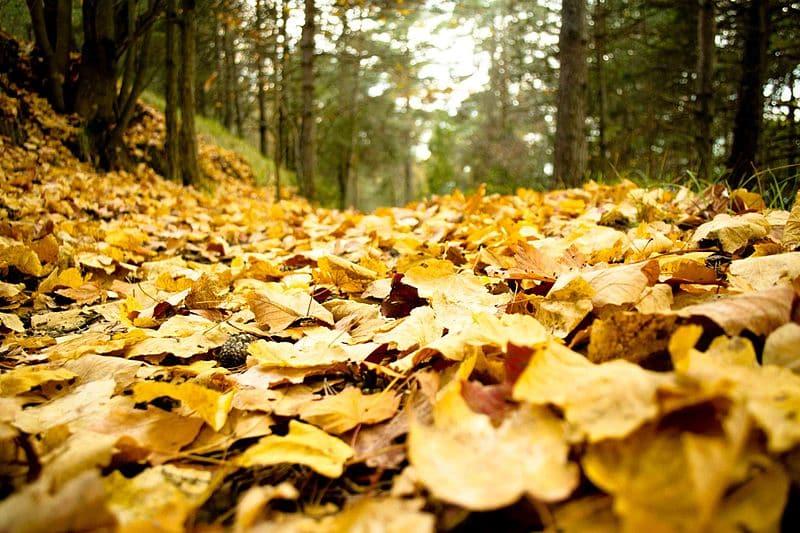 des feuilles mortes par terre