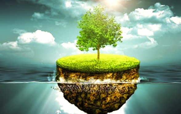 Un arbre qui pousse sur une parcelle de terre posee sur l'eau