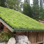 un toit de maison végétalisé