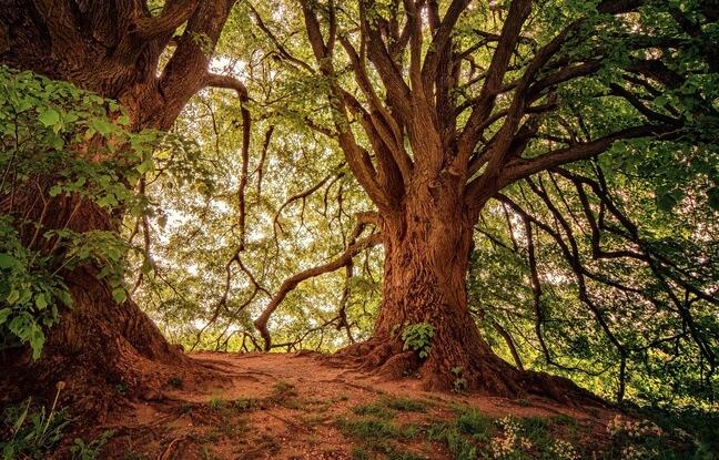 des arbres magnifiques dans une forêt