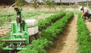 Robots agricoles dans un champs