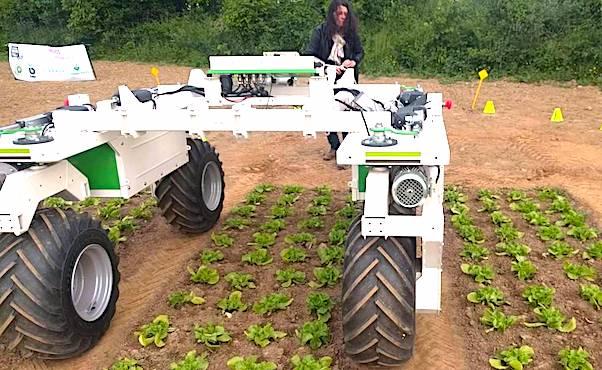 Robot agricole dans un champs