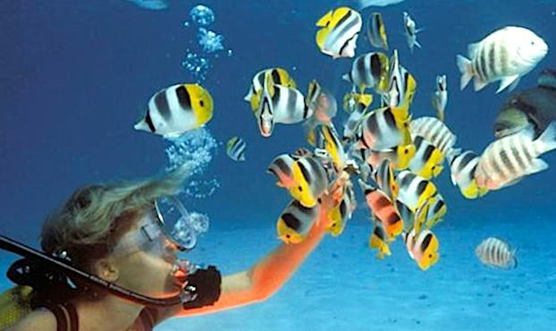 Femme faisant de la plongee sous-marine, touchant des poissons.