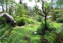 des arbres et de la végétations