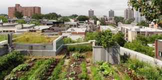 une ferme urbaine en plein centre ville