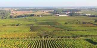 un vignoble de la Côte-d'Or