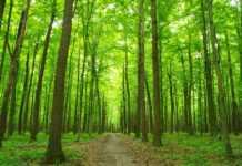 une forêt traversée par une allée