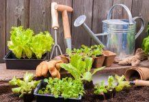 des plans et des outils pour jardiner