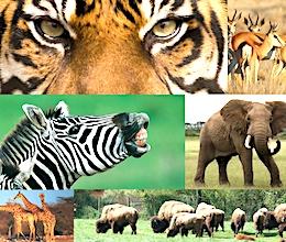 Le parc animalier Planète Sauvage va bientôt s'ouvrir avec plus d'espaces d'accueil.