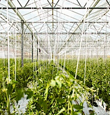 La loi Alimentation a pour vocation de mieux rémunérer les producteurs.