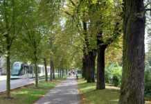 des arbres dans une ville