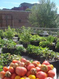 un jardin potager au coeur des 48 h de l'Agriculture Urbaine