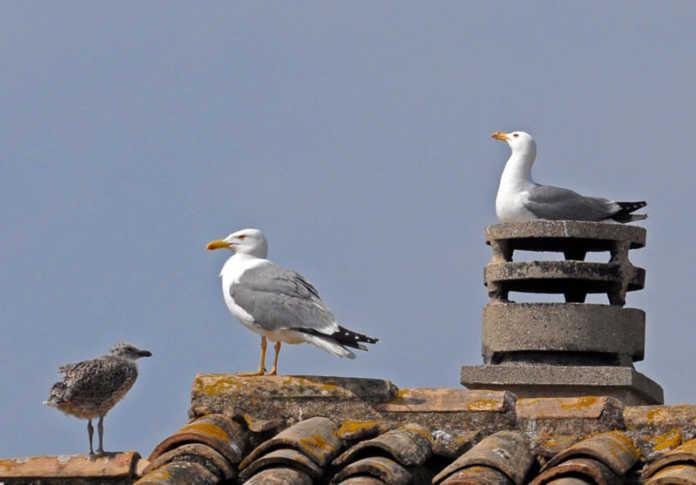des goélands sur un toit