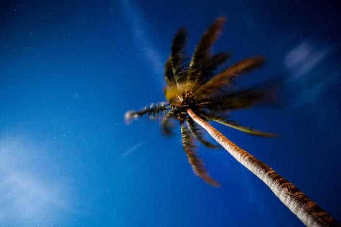 un palmier de la Côte d'Azur