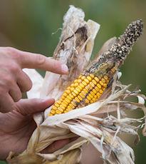Pour les agriculteurs, l'état de catastrophe naturelle permet d'obtenir des indemnisations.