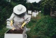 une ruche et un apiculteur