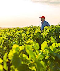 Le non-respect de certaines normes alimentaires sont au coeur du rejet actuel des accords de libre-échange.