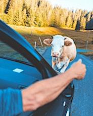 L'autonomie que permet la voiture dans les zones rurales est précieuse.