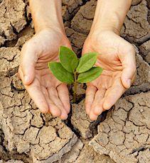 Une sécheresse persistante fait souffrir de nombreux départements français.