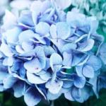 des fleurs bleues comme symbole du label Territoire engagé pour la Nature