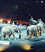un spectacle avec des éléphants pour une interdiction des animaux sauvages