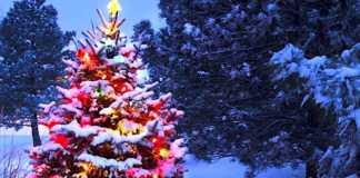 Les sapins de Noël naturels offrent beaucoup d'avantages pour l'environnement.